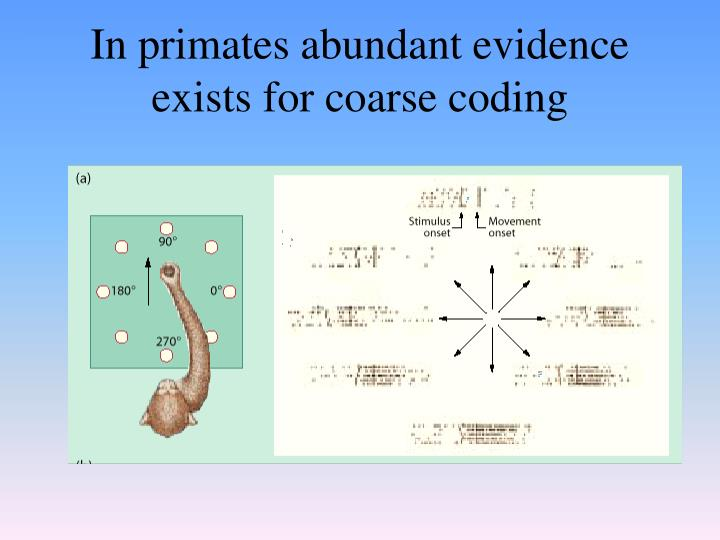 In primates abundant evidence exists for coarse coding