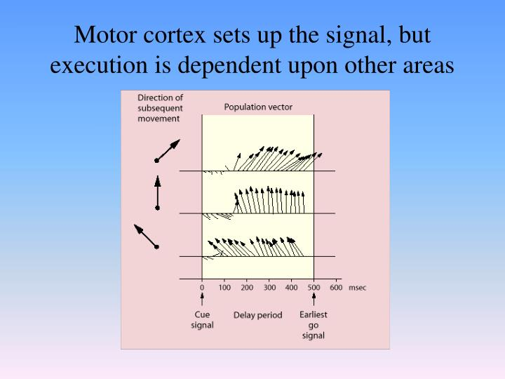 Motor cortex sets up the signal, but execution is dependent upon other areas