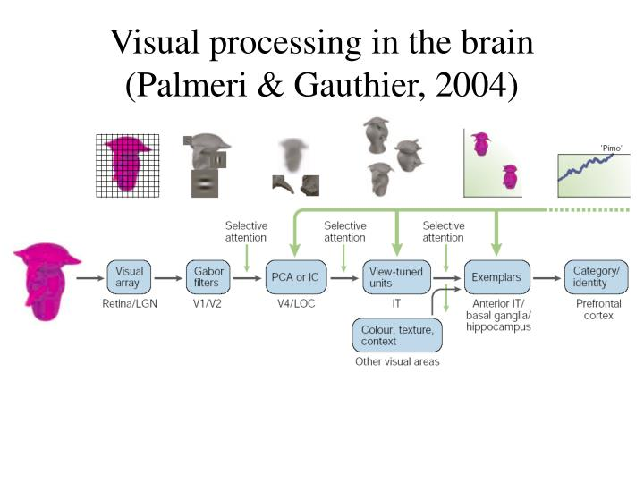 Visual processing in the brain