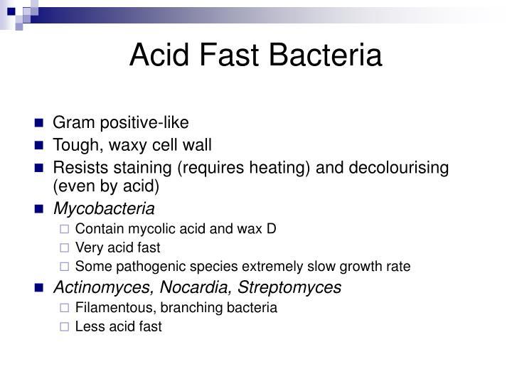 Acid Fast Bacteria
