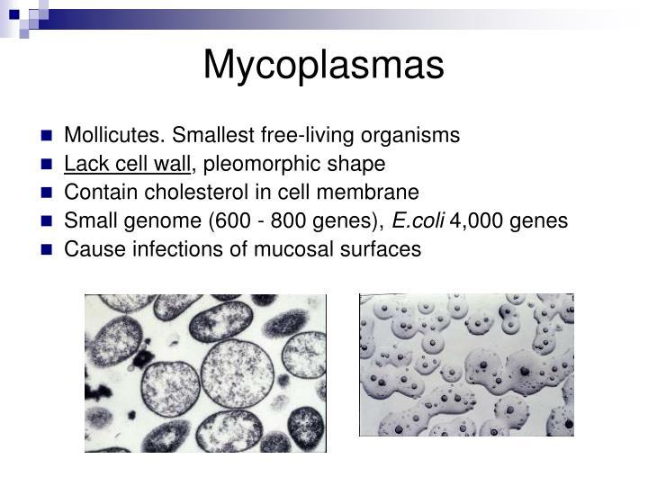 Mycoplasmas