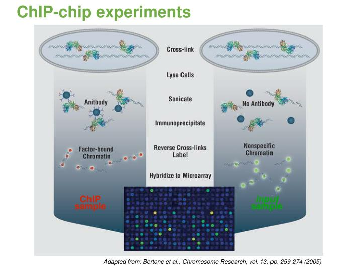 ChIP-chip experiments