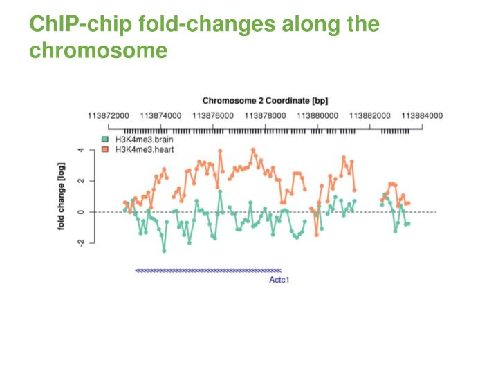 ChIP-chip fold-changes along the chromosome