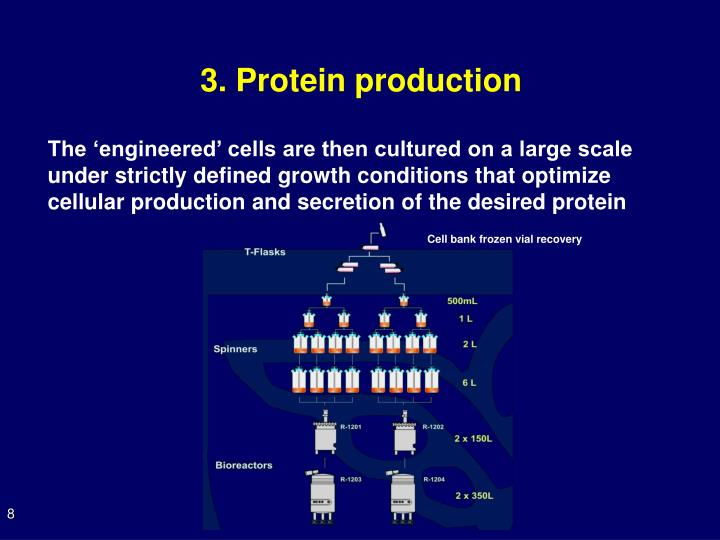3. Protein production