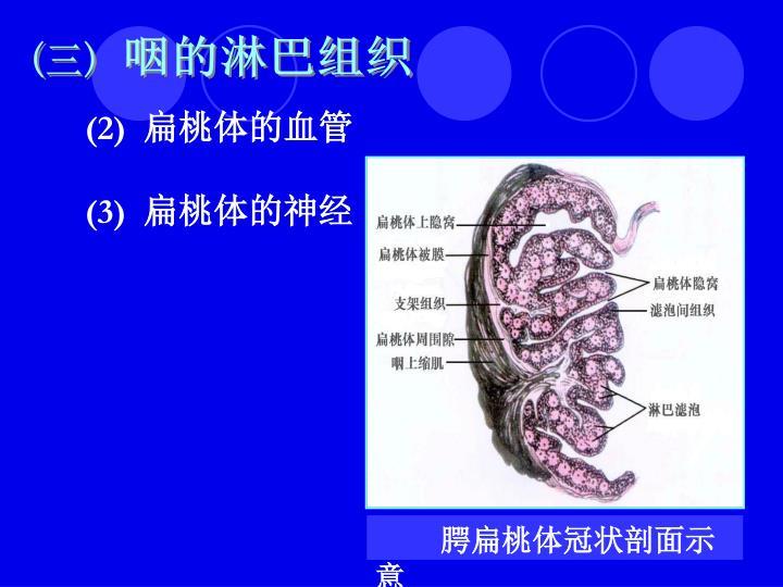 咽的淋巴组织