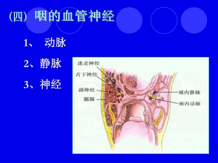 咽的血管神经