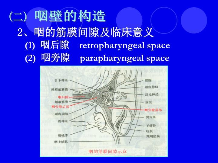 咽壁的构造