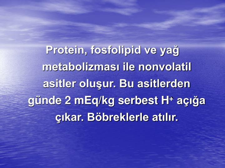 Protein, fosfolipid ve yağ metabolizması ile nonvolatil asitler oluşur. Bu asitlerden günde 2 mEq/kg serbest H