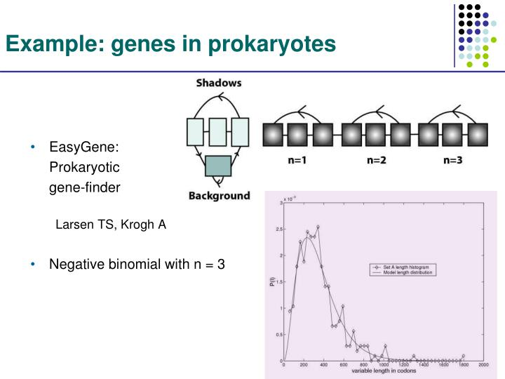 Example: genes in prokaryotes