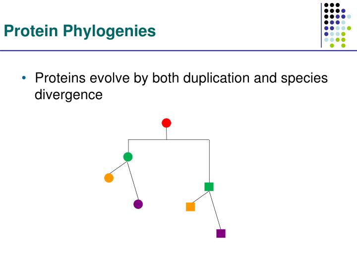 Protein Phylogenies