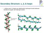 secondary structure loops