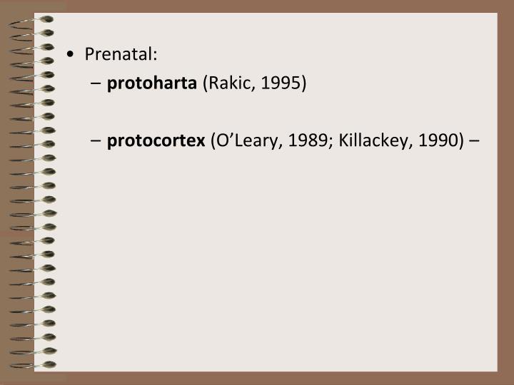 Prenatal:
