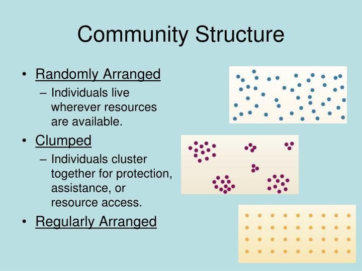 Community Structure