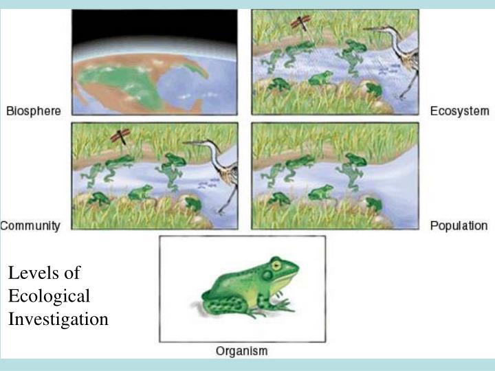 Levels of Ecological Investigation