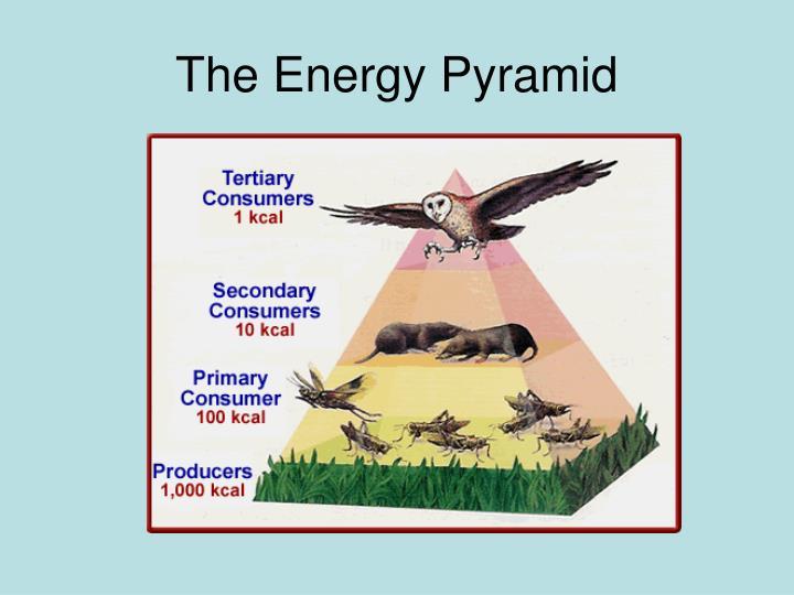 The Energy Pyramid