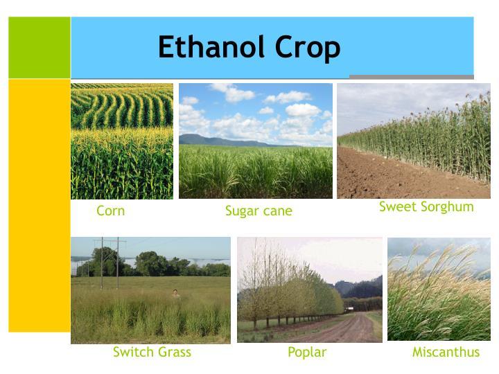 Ethanol Crop