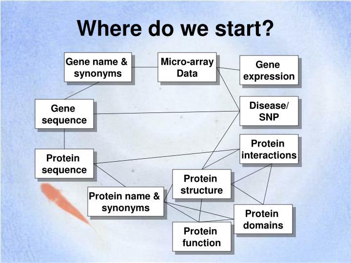 Gene name &
