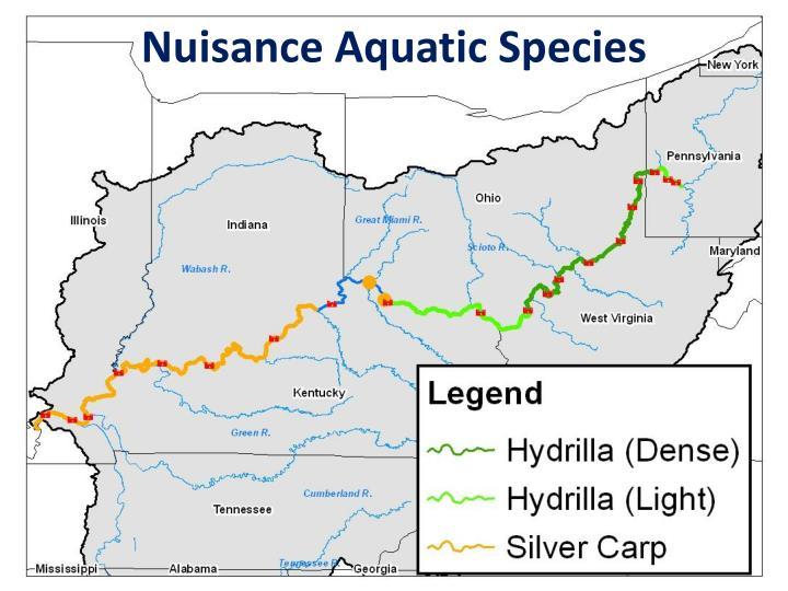 Nuisance Aquatic Species