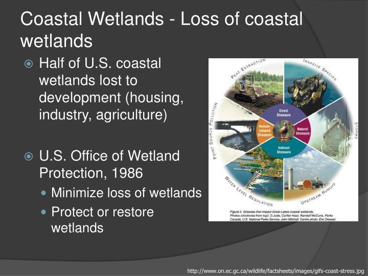 Coastal Wetlands - Loss of coastal wetlands