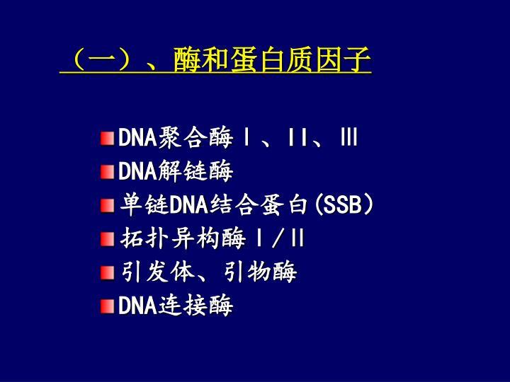 (一)、酶和蛋白质因子