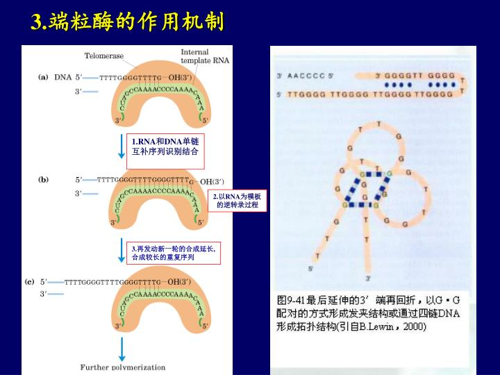 1.RNA