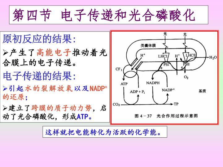 第四节 电子传递和光合磷酸化