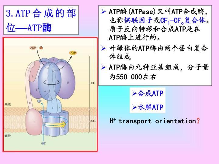 3.ATP