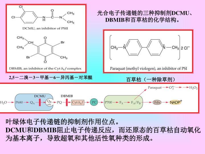 光合电子传递链的三种抑制剂