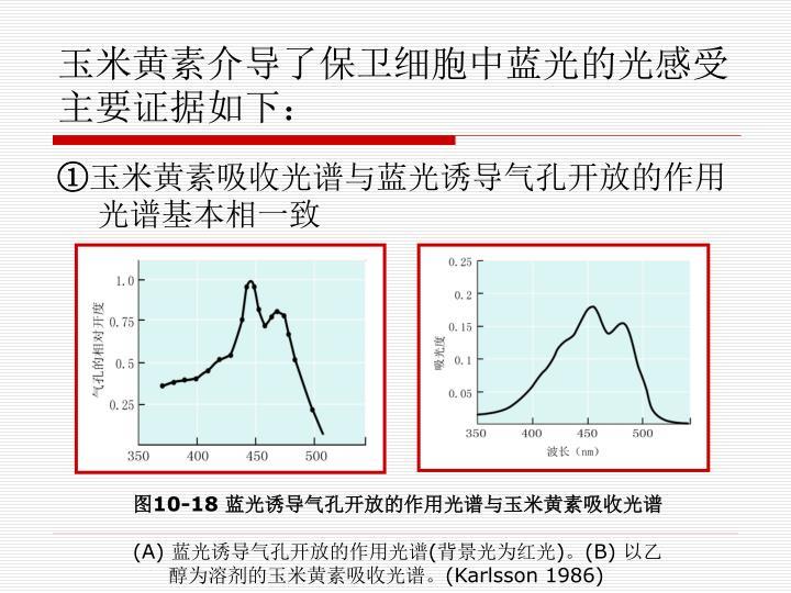 玉米黄素介导了保卫细胞中蓝光的光感受主要证据如下: