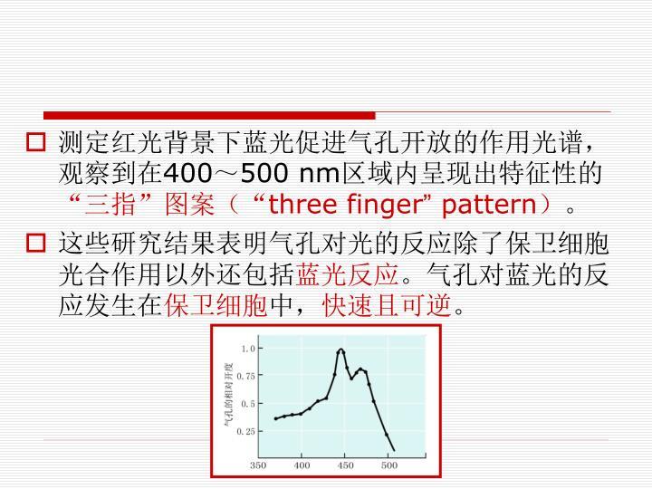 测定红光背景下蓝光促进气孔开放的作用光谱,观察到在