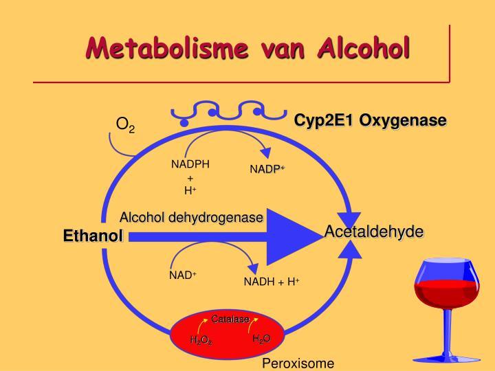 Metabolisme van Alcohol