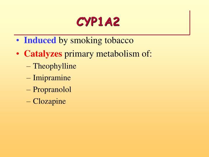 CYP1A2