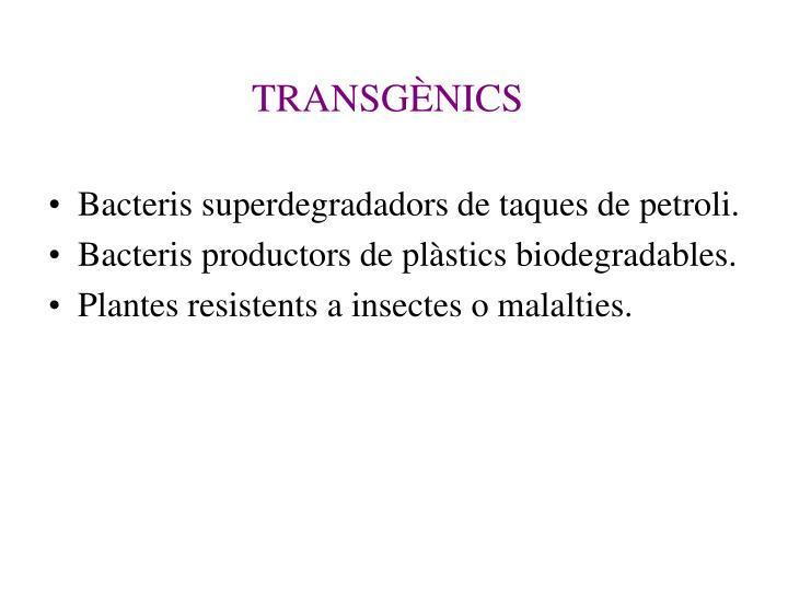 TRANSGÈNICS