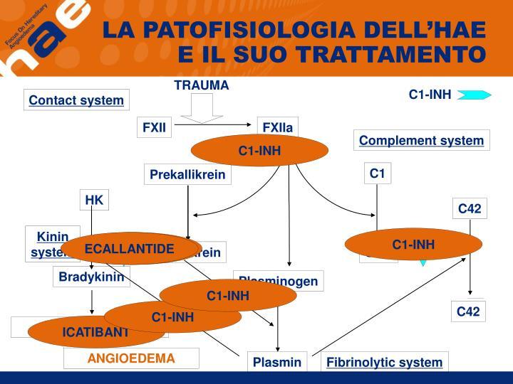 LA PATOFISIOLOGIA DELL'HAE