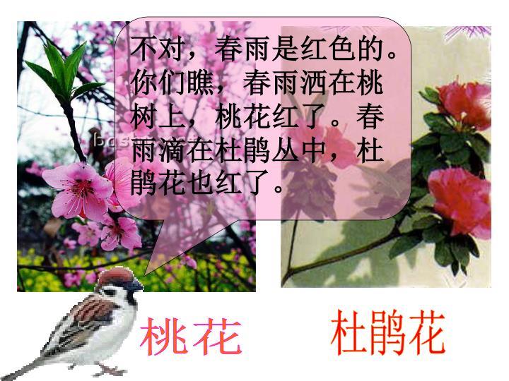 不对,春雨是红色的。你们瞧,春雨洒在桃树上,桃花红了。春雨滴在杜鹃丛中,杜鹃花也红了。