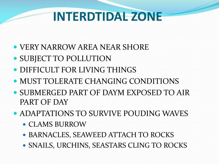INTERDTIDAL ZONE