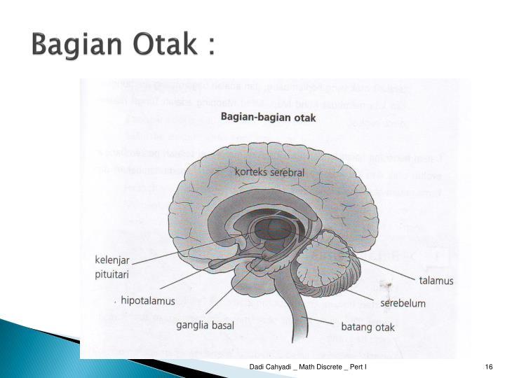Bagian Otak :