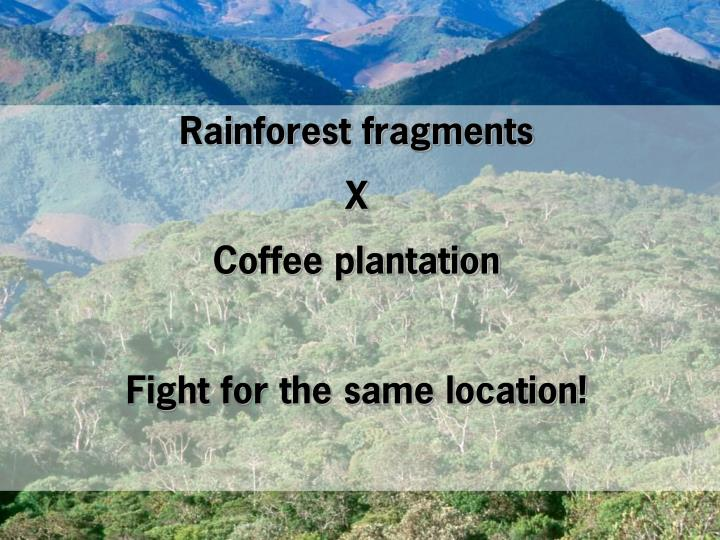 Rainforest fragments