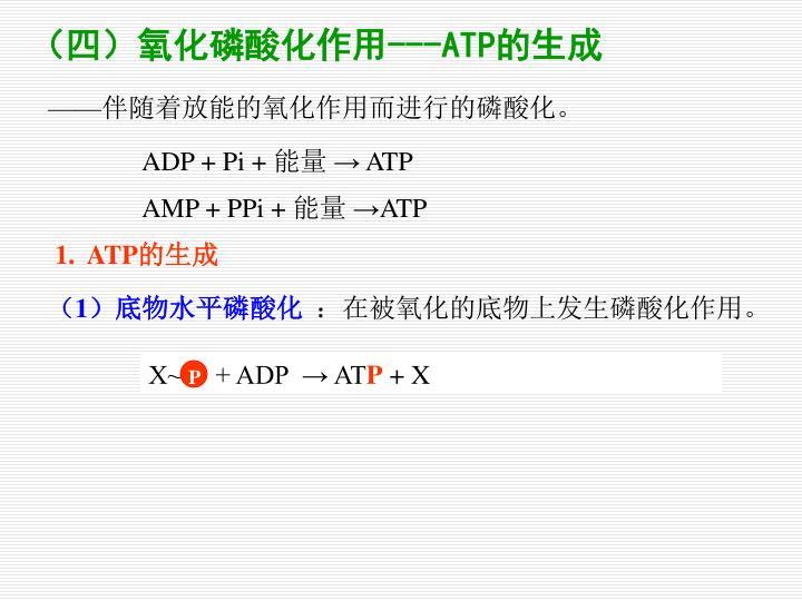 X~     + ADP  → AT