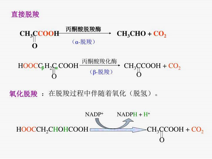 丙酮酸脱羧酶