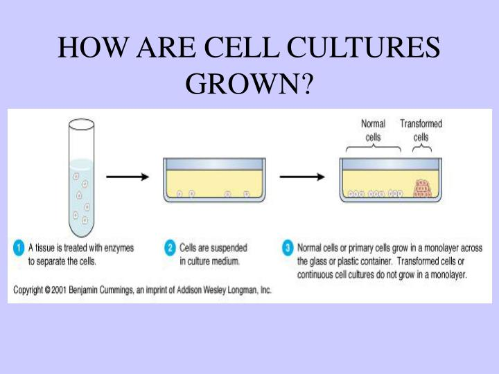 HOW ARE CELL CULTURES GROWN?