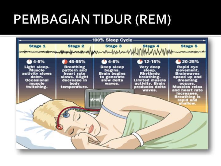 PEMBAGIAN TIDUR (REM)