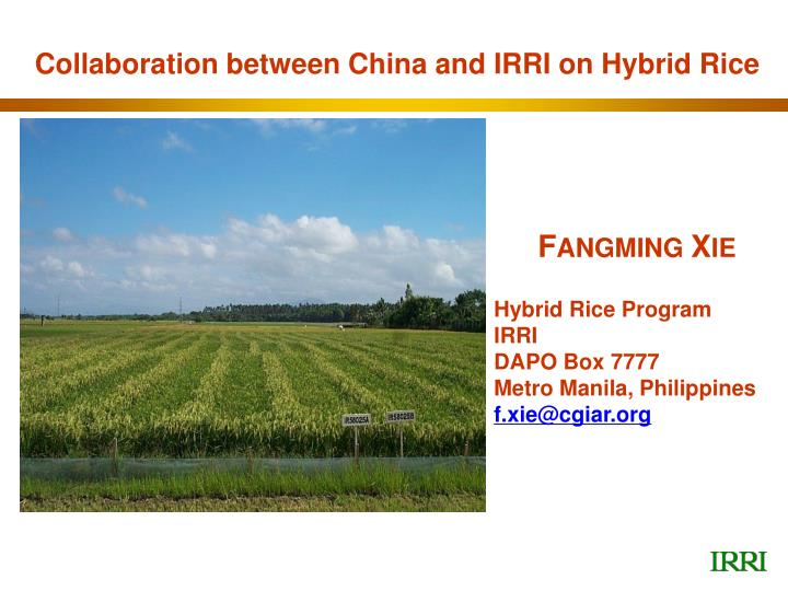 Collaboration between China and IRRI on Hybrid Rice