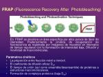 frap fluorescence recovery after photobleaching