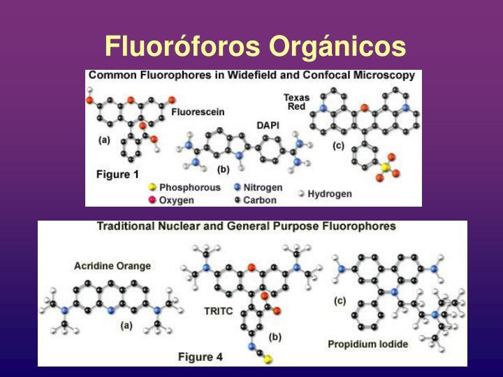 Fluoróforos Orgánicos