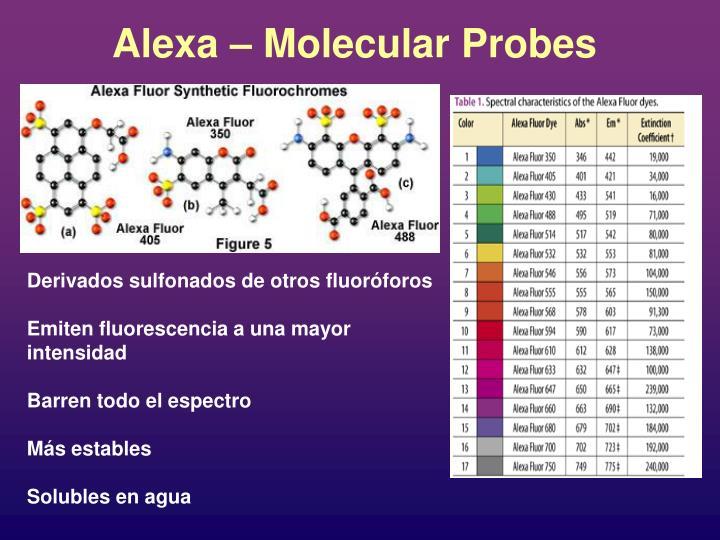 Alexa – Molecular Probes