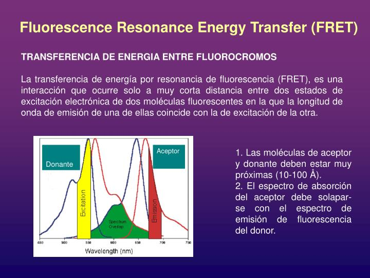 Fluorescence Resonance Energy Transfer (FRET)