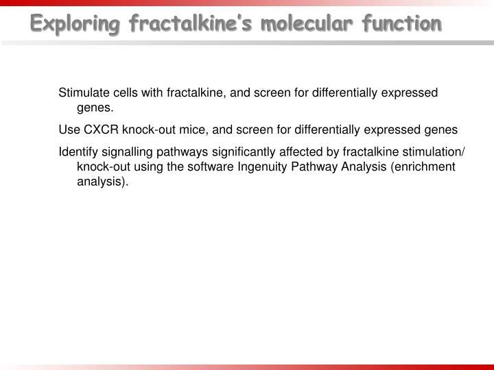 Exploring fractalkine's molecular function