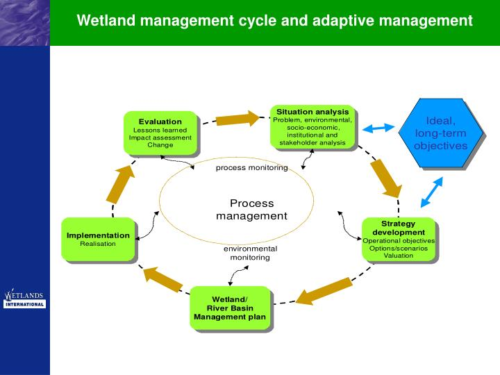 Wetland management cycle and adaptive management