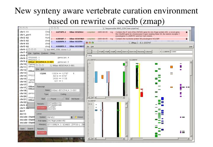 New synteny aware vertebrate curation environment based on rewrite of acedb (zmap)